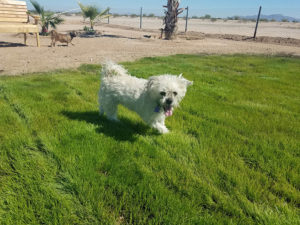 New for 2017 - dog park at Copper Mountain RV Park in Tacna AZ